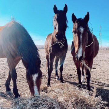 Servicio de alquiler de caballos